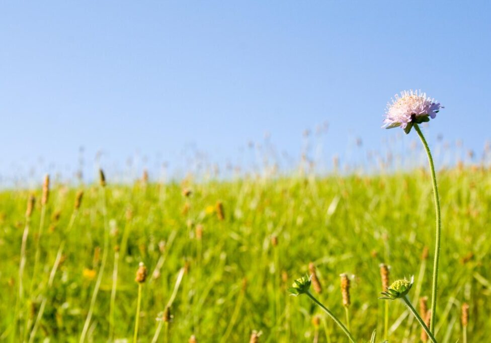 a flower on a field